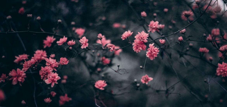flowers_dark